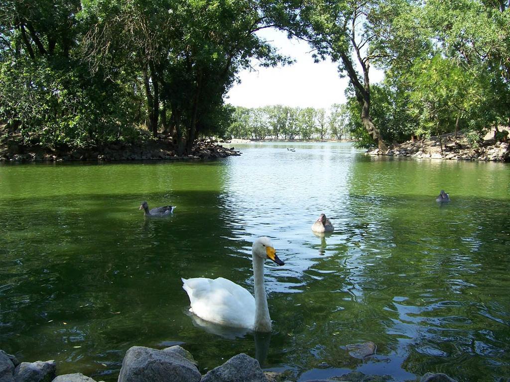 Аскания-Нова - рай на земле