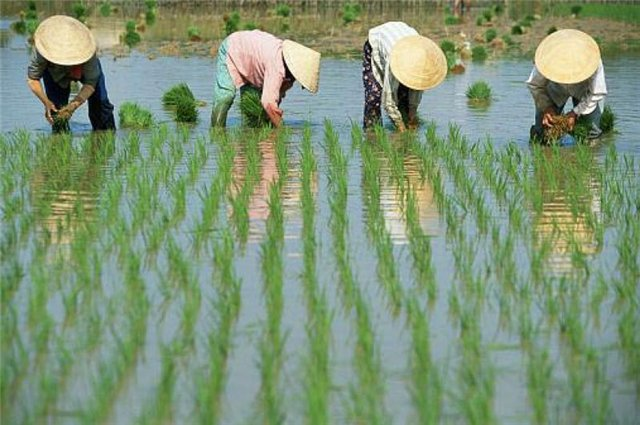 О еде на воде 4 -5 дни Меконг