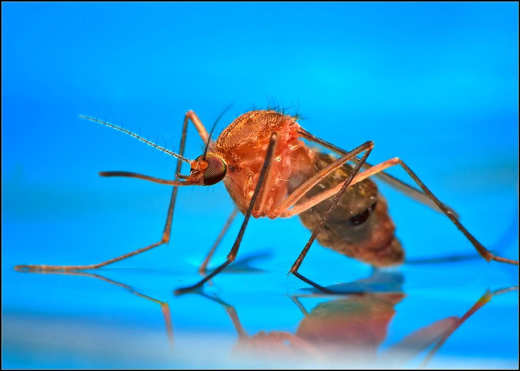Как избавиться от комаров Да очень просто!