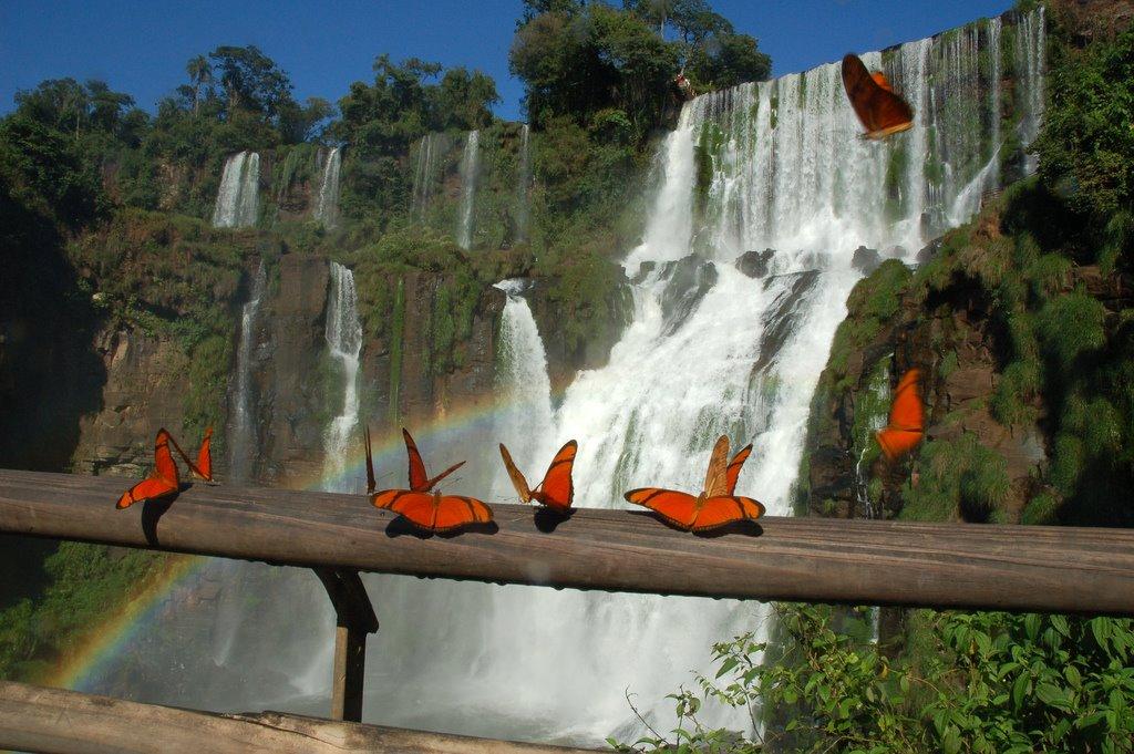 Водопад Игуасу. Аргентина.