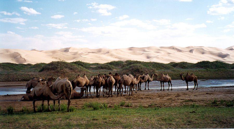По Монголии на автомобиле