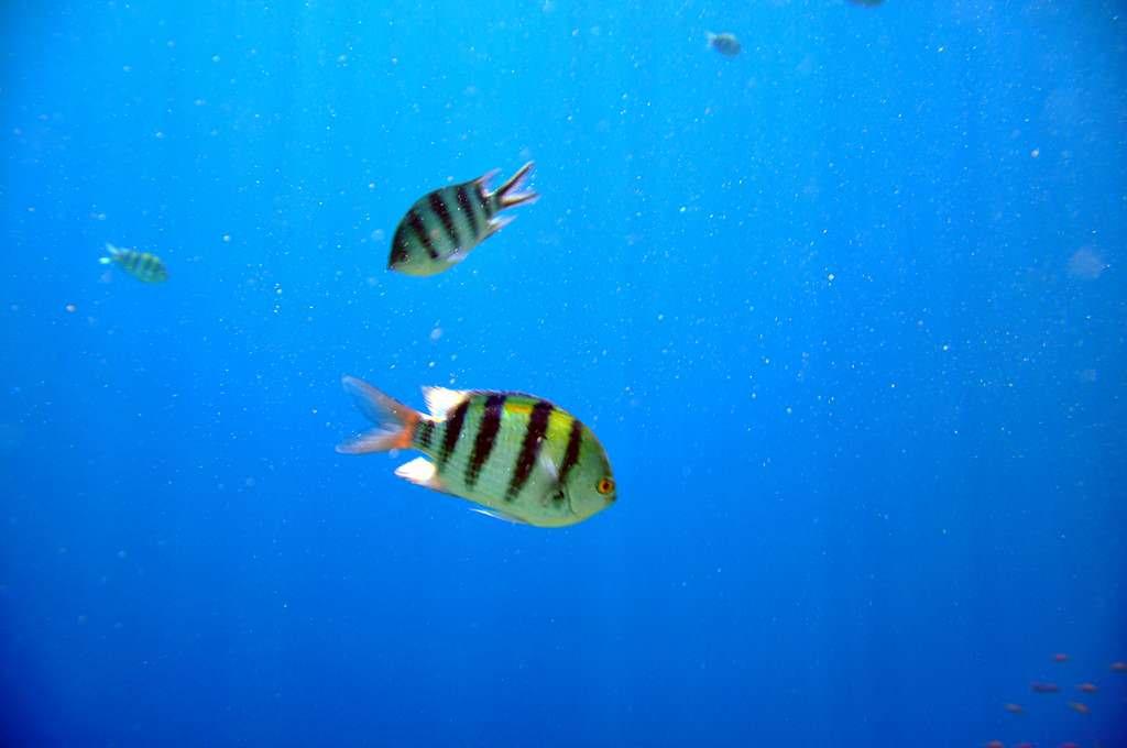 South Sinai. Подводный мир. Дайвинг. Сноркинг.