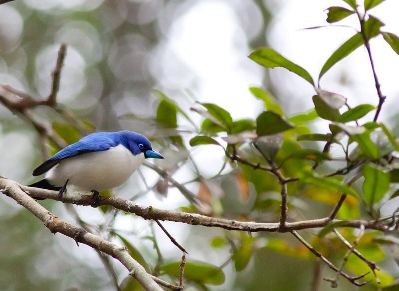 Мадагаскар – удивительный райский остров