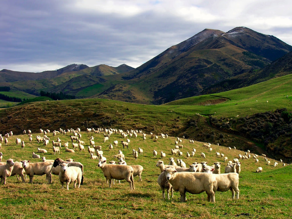 По мотивам Толкиена – Новая Зеландия